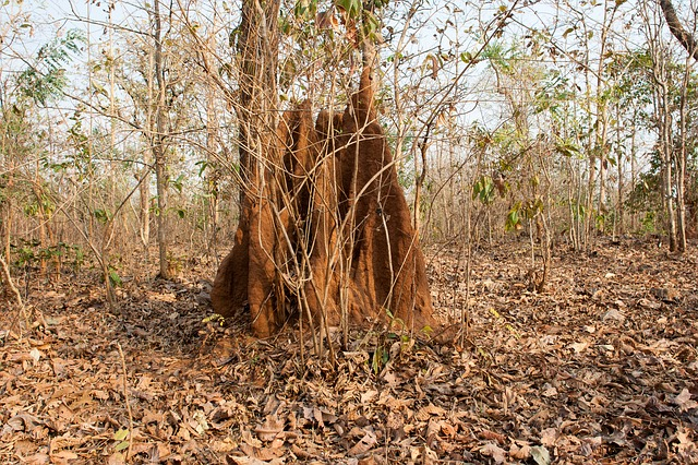 THE ANTHILL: MY EXPERIENCE AND LESSONS