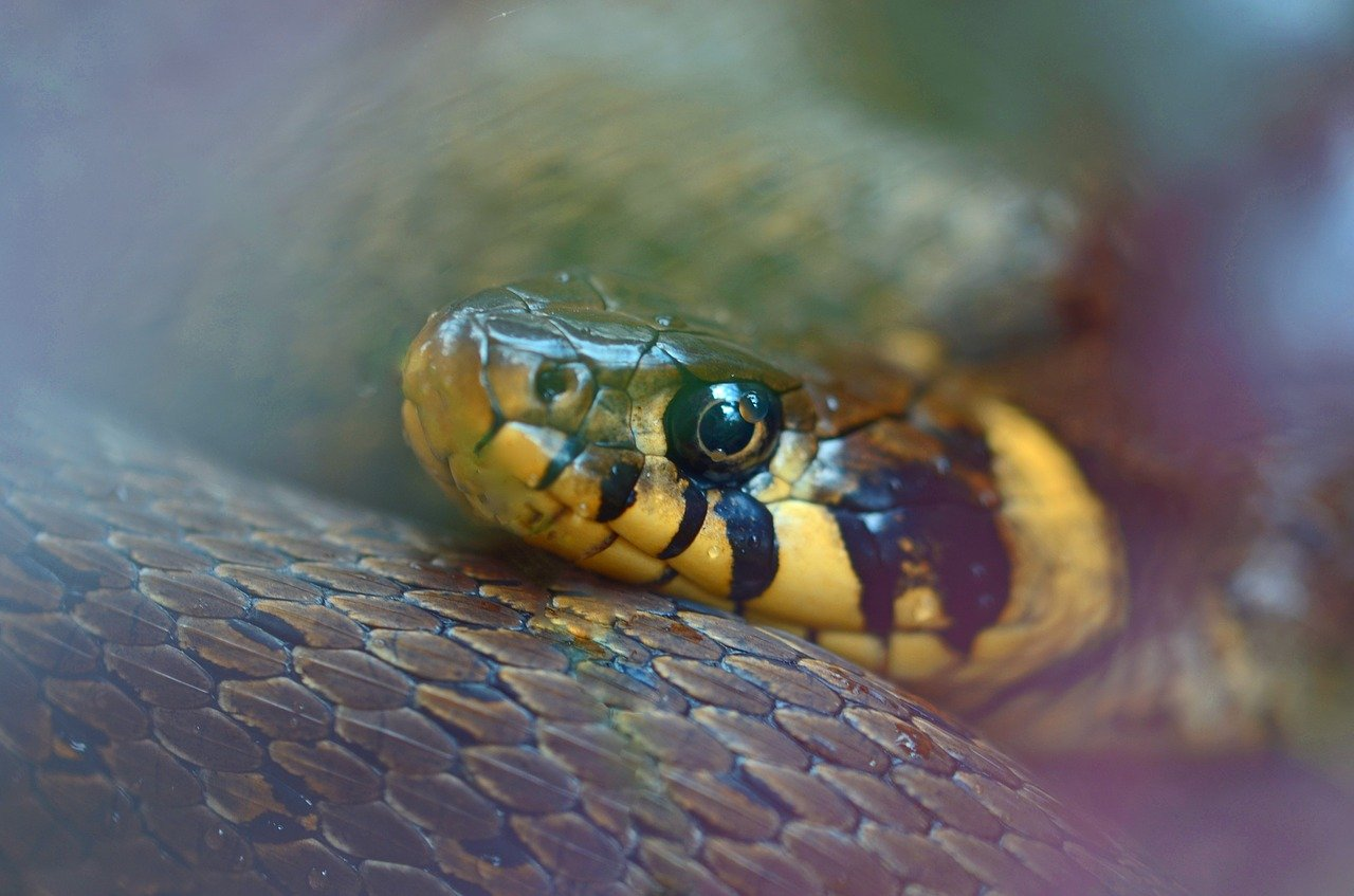 Ophidiophobia: One of Humanity's Strongest Fears